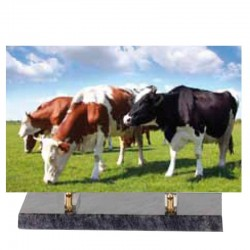 FUNERAL PLATE ALTUGLAS COWS 30 * 35 or 20 * 25